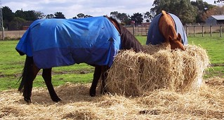 Is your horse getting all it needs from its diet?