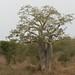 Angola impressions - IMG_2816_CR2_v1