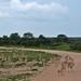 Etosha National Park impressions, Namibia - IMG_3063_CR2_v1