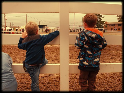 watching the horses