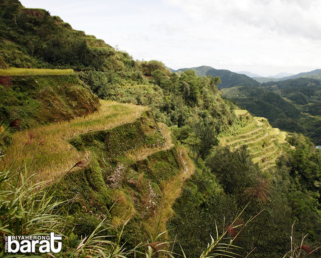Rice terraces in Banaue, on the way to Chappa Falls