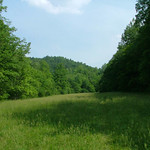 Meadow at Falls Ridge Nature Preserve