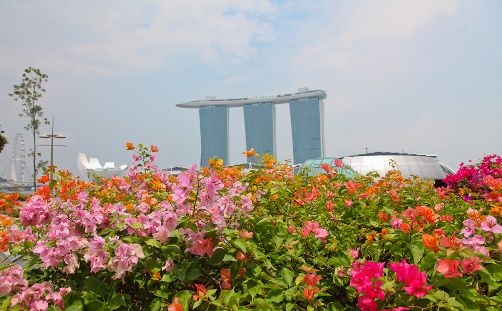 Marina Bay Sands in Bloom