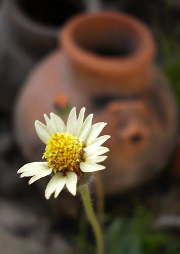 Flower & pot by Vijay Sonar