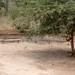 Angola impressions - IMG_2807_CR2_v1