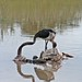 Etosha National Park impressions, Namibia - IMG_3238_CR2_v1