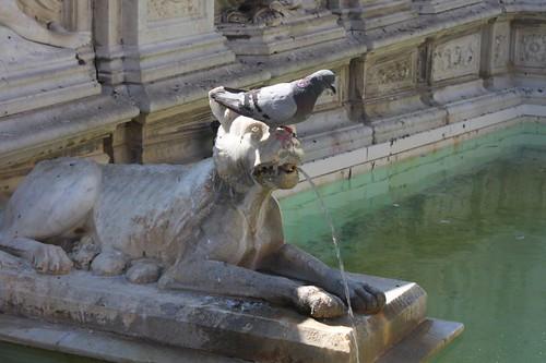 20120808_5051_Siena-fonte-Gaia