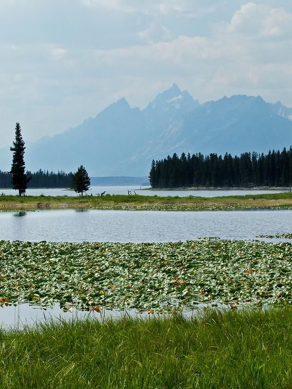 Wet Meadows on Heron Pond, with Grand Teton Range at distance, Grand Teton National Park
