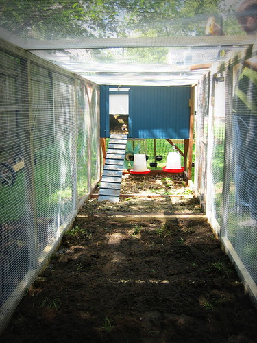 20120908. Extending the chicken run - chicken view.