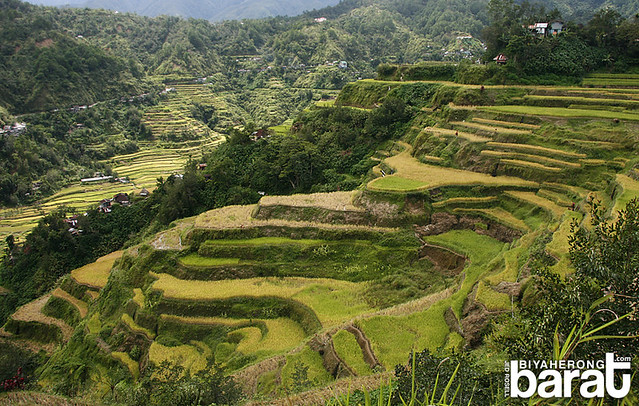 Passing by rice terraces on the way to Chappa Falls Banaue