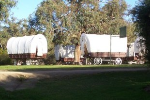 Wagon's that visitors stay in on the ranch.