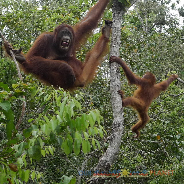 Orangutan World, Tanjung Puting Borneo Adventure-176.jpg