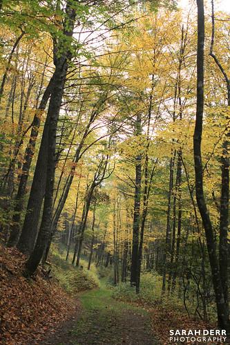 Highland Foliage