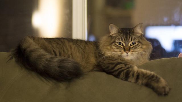 Momo the cat taken at f1.8