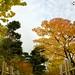 Anderson Japanese Gardens 0