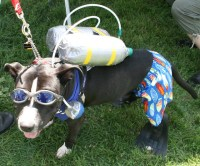 Scuba Diver Dog Costume | Flickr - Photo Sharing!