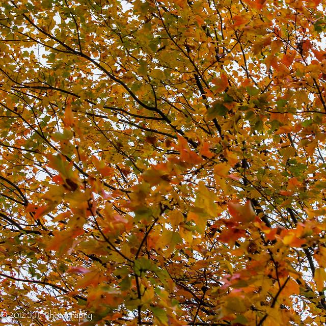 2012_Oct_15_Fall_016