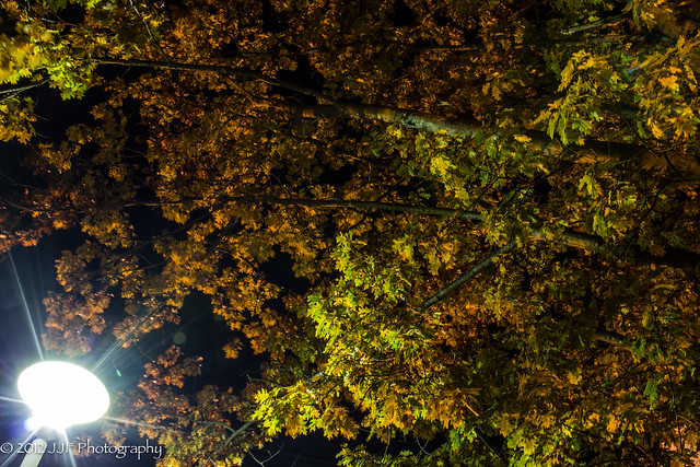 2012_Oct_18_Autumn Night_007