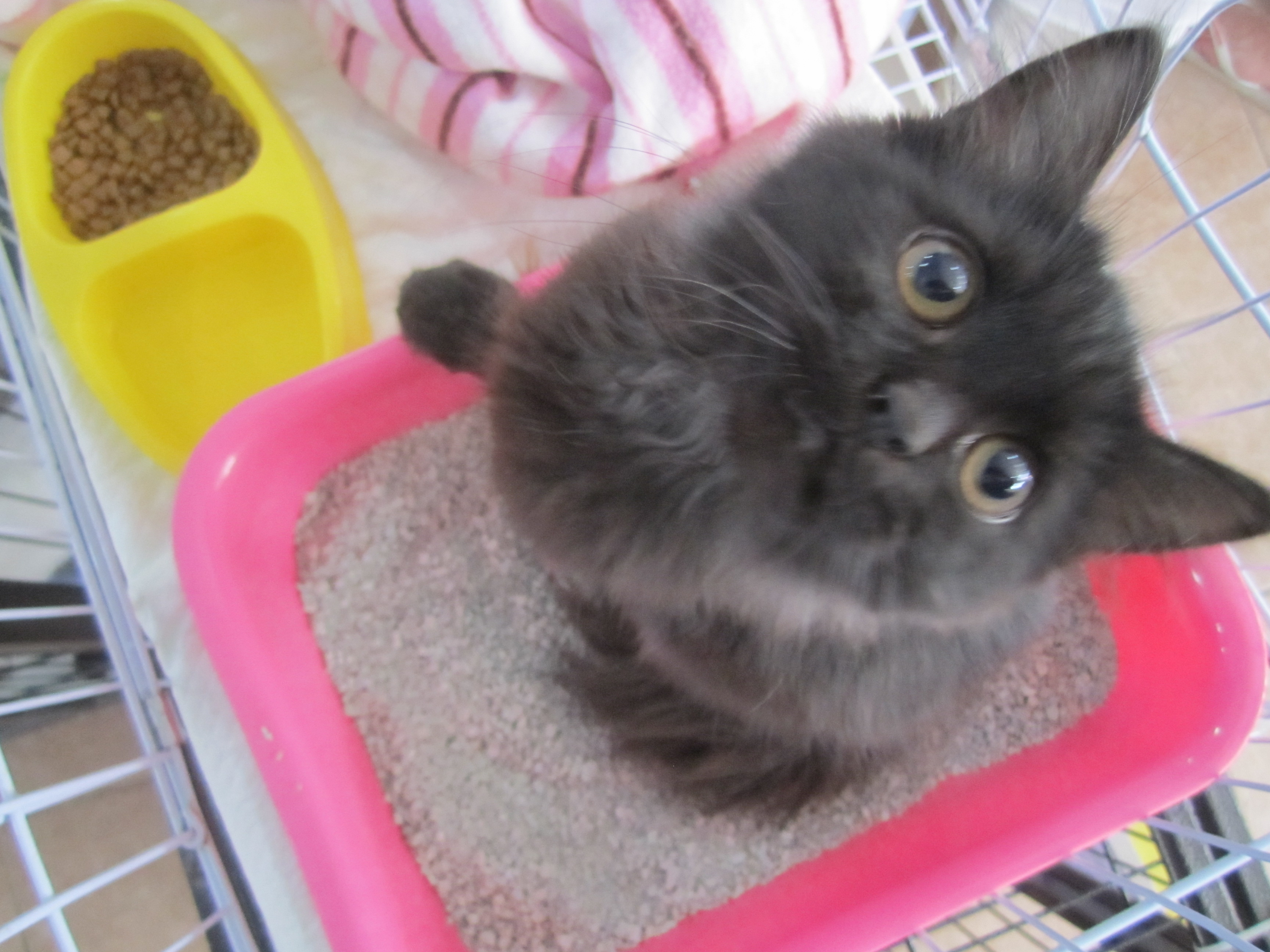 Rehome kitten