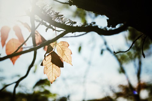 IMG_5245 by Lily M-C