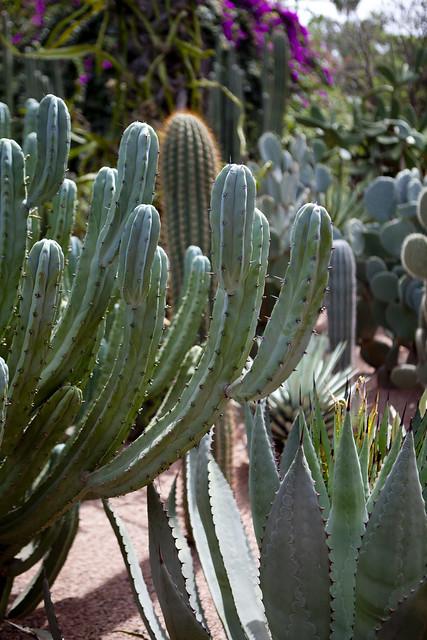 Majorelle Gardens, Marrakech, succulents, Morocco