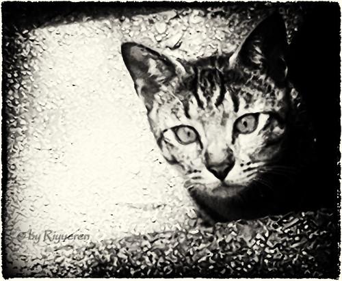 Sguardo di gatto