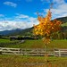 Colore d'autunno