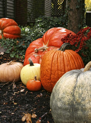Plethora of pumpkins in Circleville, Ohio. Copyright Jen Baker/Liberty Images; all rights reserved.