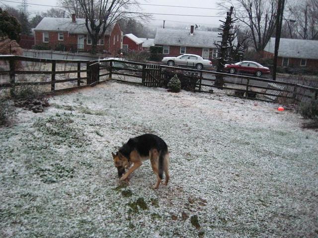 Pyrrha's first snow