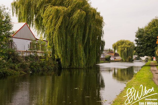 Wind in the Willows – Daily Photo (12th October 2012)