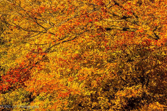 2012_Oct_16_Fall Foliage_002