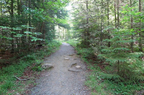 Bald Mountain Trail Beginning