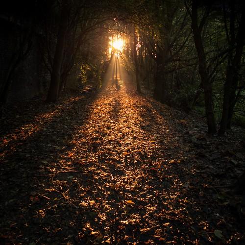 Autumn Fantasy : Let the Light Guide You (Bois de la Chartreuse, Liege) - Photo : Gilderic