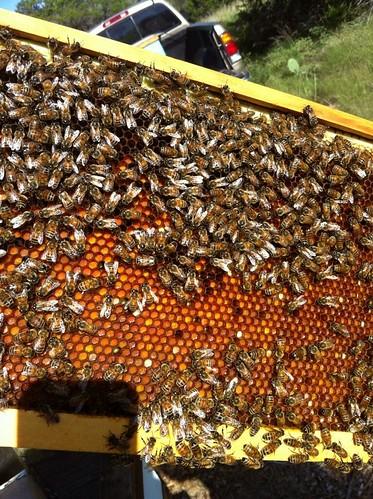 Bees & Pollen