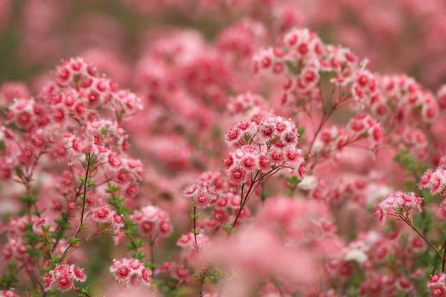 Australian Wildflowers in spring