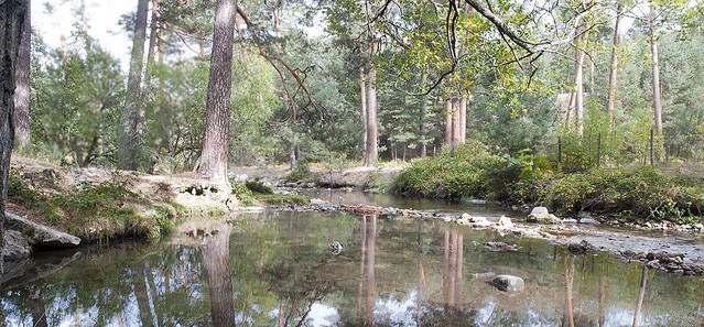 Río Eresma #5
