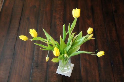 Yellow Tulips4
