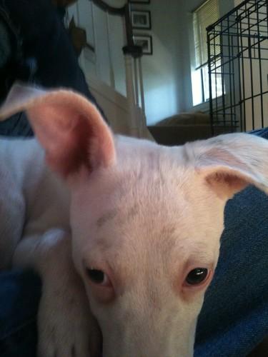 Half ears