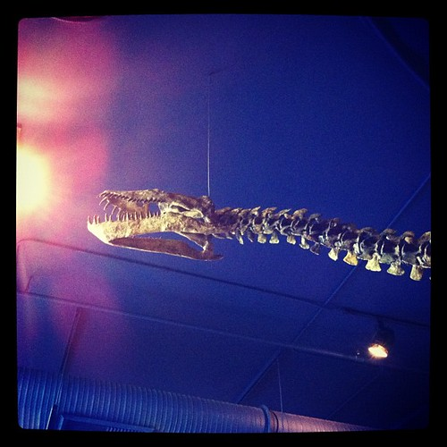 Plesiosaur.