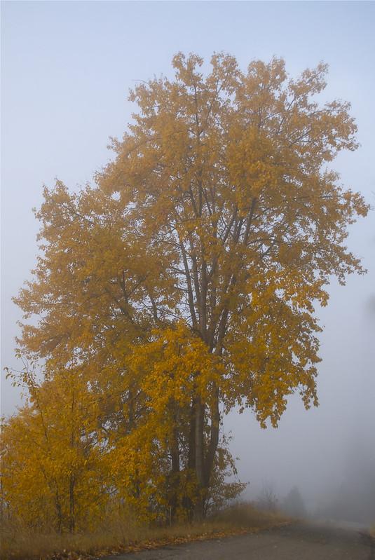 November Gold