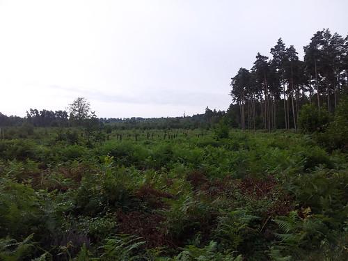 rando-caching forêt Bord Normandie
