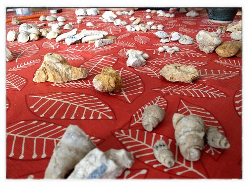 Fossil sorting