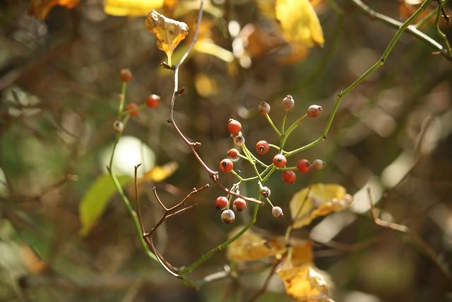 mystery berries