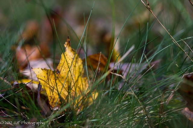 2012_Oct_17_Fall Foliage_009