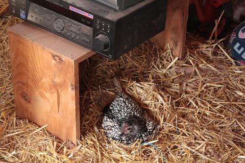 Quicksilver's Nest