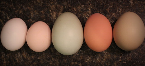 20130205. Five different chickens, five different eggs.
