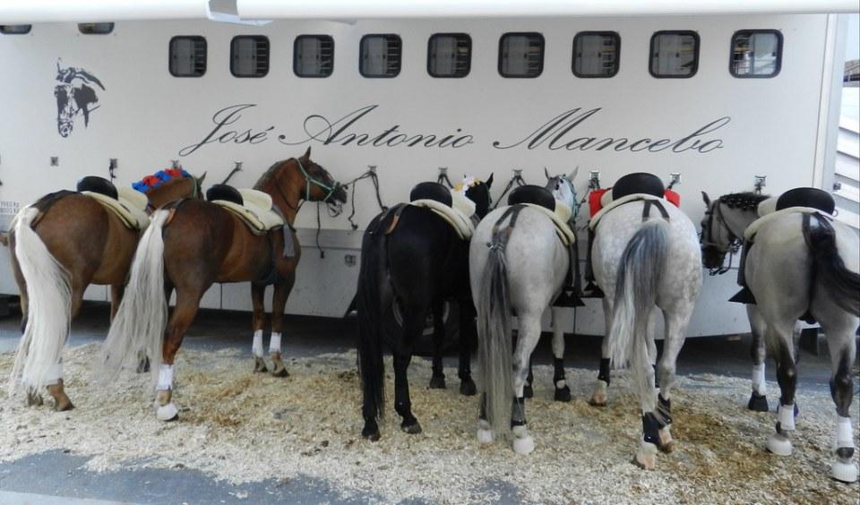Fotos caballos antes de la corrida rejones Fuengirola 2012 04