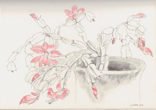 Drawing of Christmas Cactus