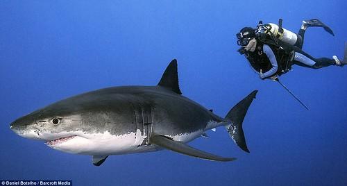 環團為大白鯊說話:「沒了鯊魚 人類更危險」 | 臺灣環境資訊協會-環境資訊中心