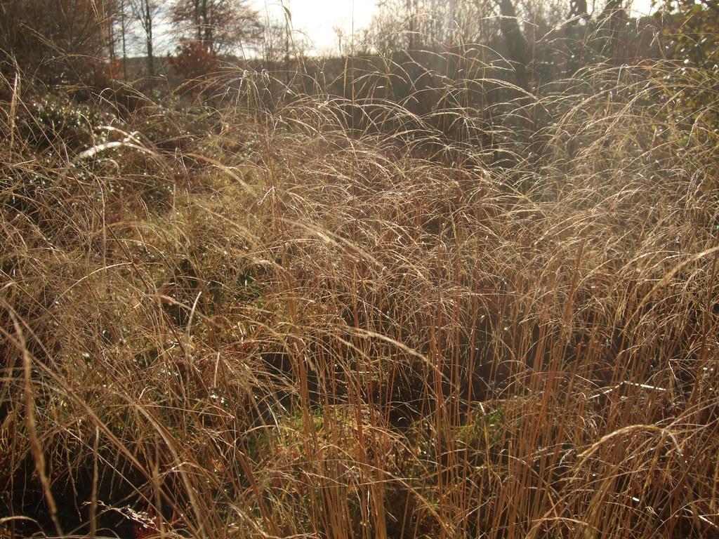 Grass II.